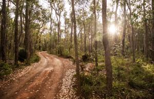 Jarrah Forest track