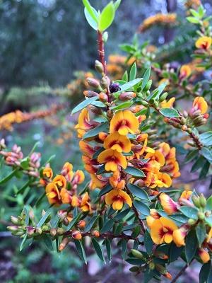 Margaret River Wildflowers bloom in spring
