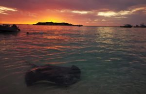 Sunset in Hamelin Bay with a stingray on the coastline.