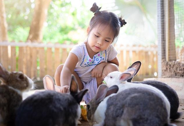 Feeding rabbits at the Sunflowers Animal Farm
