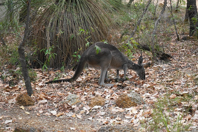 See native animals and wildlife on this fun quad bike tour