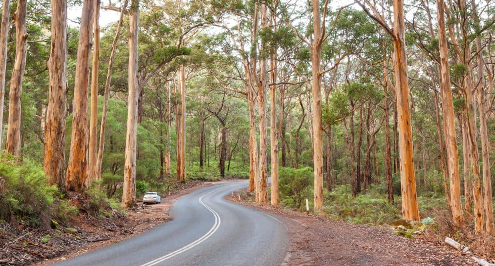 Go for a drive at Caves Road and stop to appreciate nature at Karri Forest.