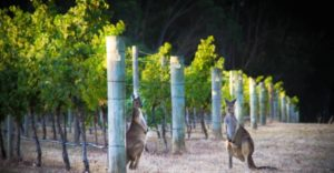 Wine and Adventure tour by Margaret River Discovery Co.