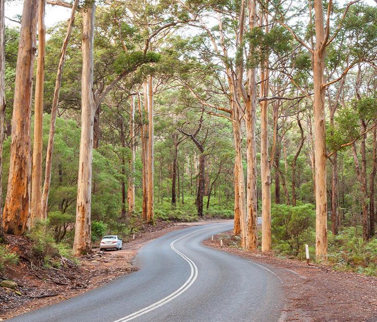 Wardanup Trail, Yallingup