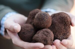 A weekend filled with exquisite dining events, truffle hunts, markets and more.